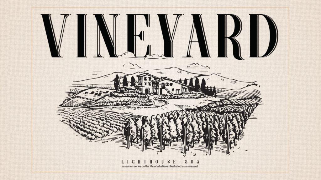 Vineyard in Ventura